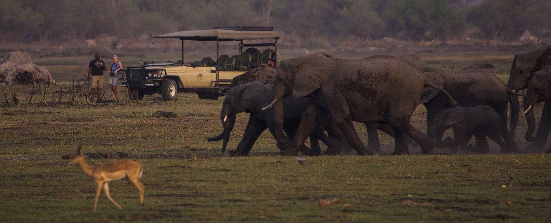 elefanti ita