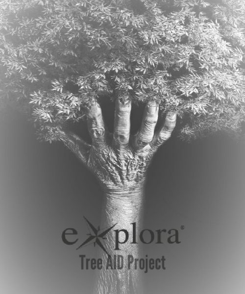 tree-AID-Project